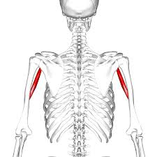 misaligned bones
