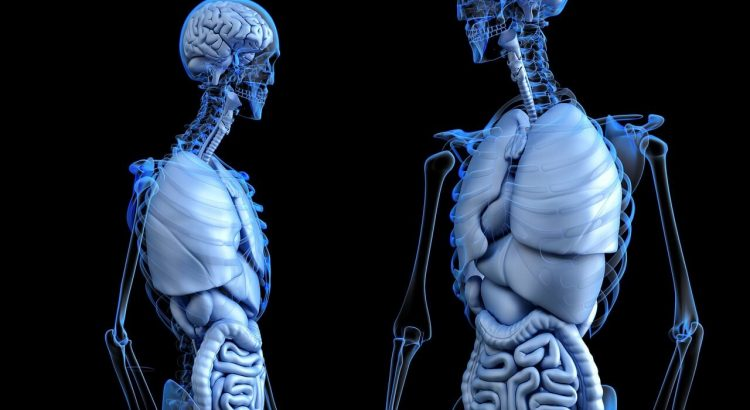 vitamins minerals promote bone health
